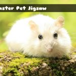 Hamster Pet Jigsaw